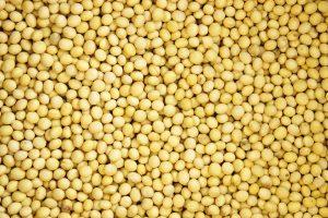 大豆エキスイメージの画像